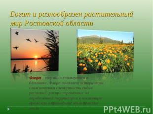 Богат и разнообразен растительный мир Ростовской области Флора - термин использ