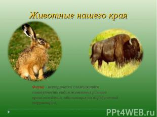Животные нашего края Фауна - исторически сложившаяся совокупность видов животных