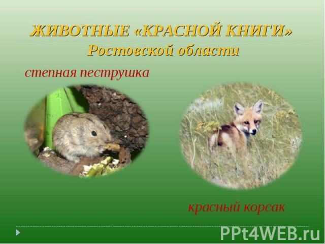 ЖИВОТНЫЕ «КРАСНОЙ КНИГИ» Ростовской области степная пеструшка красный корсак