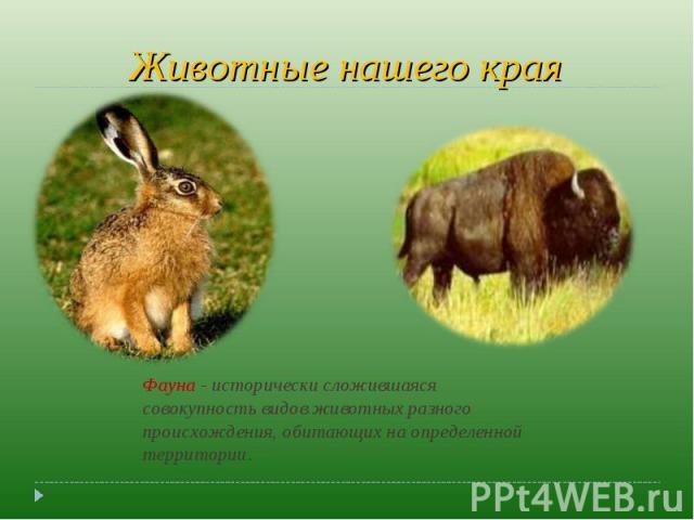 Животные нашего края Фауна - исторически сложившаяся совокупность видов животных разного происхождения, обитающих на определенной территории.