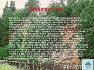 Вепсский лес Вдалеке от суеты больших городов, шума автомобильных дорог и звонко