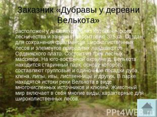 Заказник «Дубравы у деревни Велькота» расположен у д. Велькота близ Котельничско