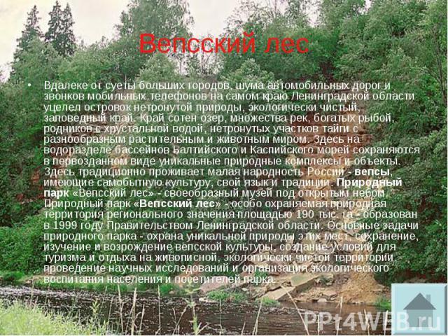 Вепсский лес Вдалеке от суеты больших городов, шума автомобильных дорог и звонков мобильных телефонов на самом краю Ленинградской области уцелел островок нетронутой природы, экологически чистый, заповедный край. Край сотен озер, множества рек, богат…