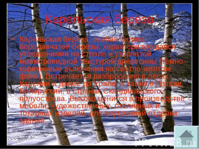 Карельская берёза Карельская берёза, особая форма бородавчатой берёзы, характеризующаяся утолщениями на стволе и узорчатой мраморовидной текстурой древесины (тёмно-коричневые включения на светло-жёлтом фоне). Встречается разбросанно в лесах Карелии …