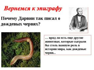 Вернемся к эпиграфу Почему Дарвин так писал о дождевых червях? … вряд ли есть ещ