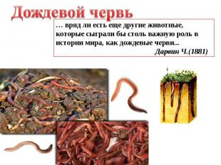 Дождевой червь … вряд ли есть еще другие животные, которые сыграли бы столь важн