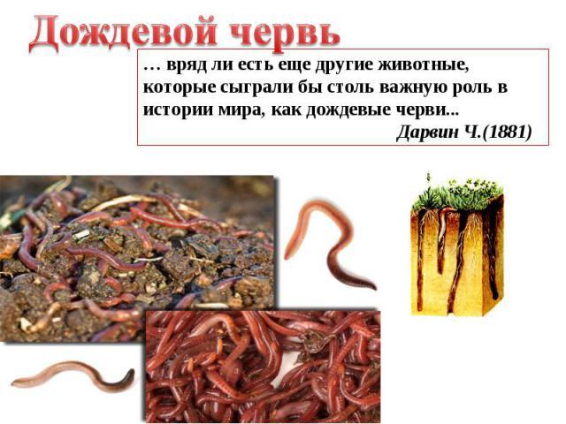 Дождевой червь … вряд ли есть еще другие животные, которые сыграли бы столь важную роль в истории мира, как дождевые черви... Дарвин Ч.(1881)
