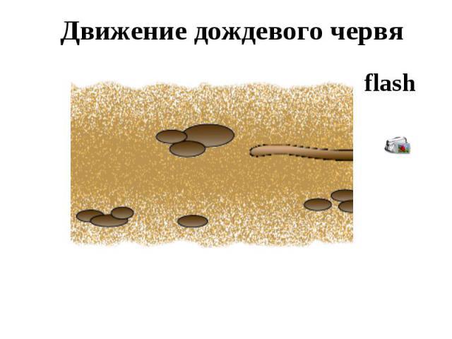 Движение дождевого червя