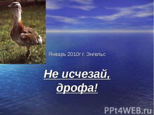 Январь 2010г г. Энгельс Не исчезай, дрофа!