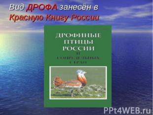 Вид ДРОФА занесён в Красную Книгу России