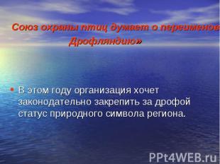 Союз охраны птиц думает о переименовании Саратовской области в «Дрофляндию» В эт
