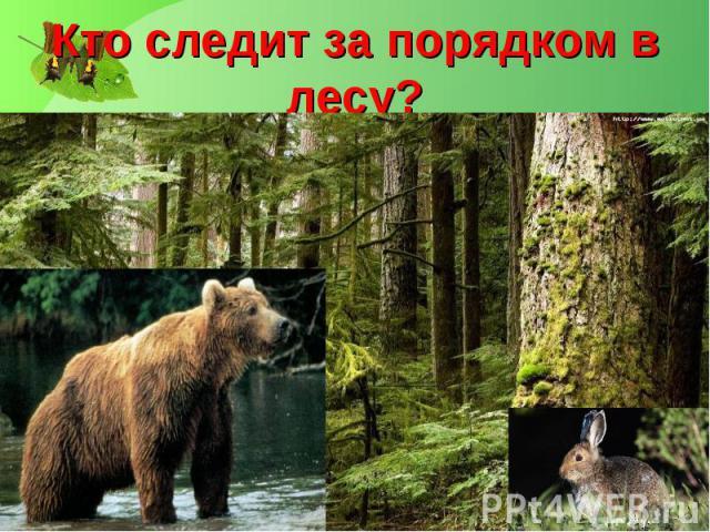 Кто следит за порядком в лесу?