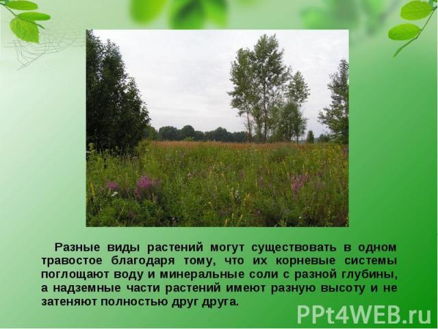 Разные виды растений могут существовать в одном травостое благодаря тому, что их корневые системы поглощают воду и минеральные соли с разной глубины, а надземные части растений имеют разную высоту и не затеняют полностью друг друга.