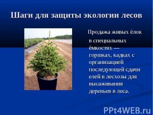 Шаги для защиты экологии лесов Продажа живых ёлок в специальных ёмкостях— горшк