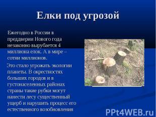 Елки под угрозой Ежегодно в России в преддверии Нового года незаконно вырубается