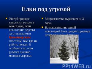 Елки под угрозойУщерб природе наносится только в том случае, если новогодние дер