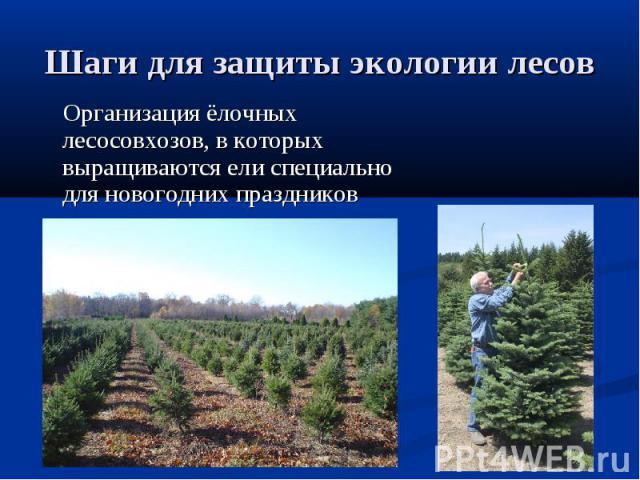 Шаги для защиты экологии лесов Организация ёлочных лесосовхозов, в которых выращиваются ели специально для новогодних праздников