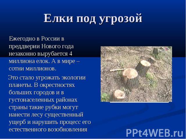 Елки под угрозой Ежегодно в России в преддверии Нового года незаконно вырубается 4 миллиона елок. А в мире – сотни миллионов. Это стало угрожать экологии планеты. В окрестностях больших городов и в густонаселенных районах страны такие рубки могут на…