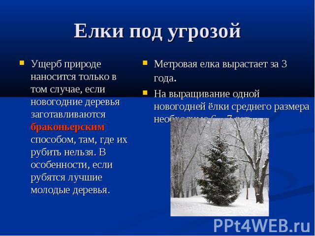 Елки под угрозойУщерб природе наносится только в том случае, если новогодние деревья заготавливаются браконьерским способом, там, где их рубить нельзя. В особенности, если рубятся лучшие молодые деревья. Метровая елка вырастает за 3 года. На выращив…