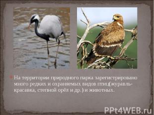 На территории природного парка зарегистрировано много редких и охраняемых видов