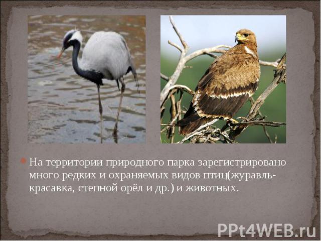 На территории природного парка зарегистрировано много редких и охраняемых видов птиц(журавль-красавка, степной орёл и др.) и животных.