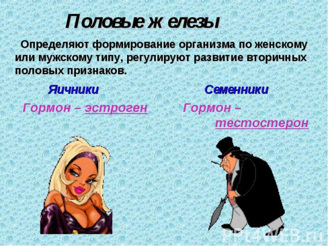 Половые железы Определяют формирование организма по женскому или мужскому типу, регулируют развитие вторичных половых признаков. Яичники Гормон – эстроген Семенники Гормон – тестостерон