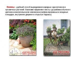 Вазоны - удобный способ выращивания нарядных однолетников и луковичных растений.