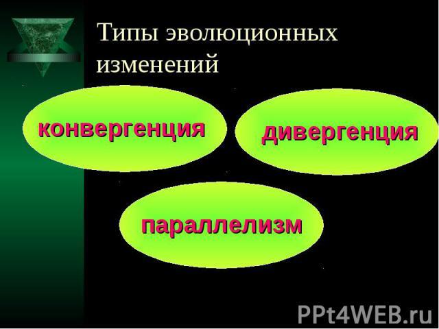 Типы эволюционных изменений конвергенция дивергенция параллелизм