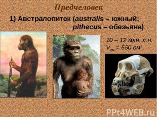 Предчеловек 1) Австралопитек (australis – южный; pithecus – обезьяна) 10 – 12 мл