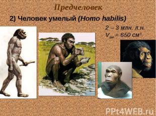 Предчеловек 2) Человек умелый (Homo habilis) 2 – 3 млн. л.н. Vгм = 650 см3