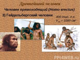 Древнейший человек Человек прямоходящий (Homo erectus) 3) Гейдельбергский челове