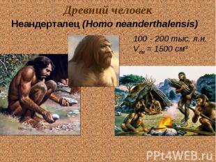Древний человек Неандерталец (Homo neanderthalensis) 100 - 200 тыс. л.н. Vгм = 1