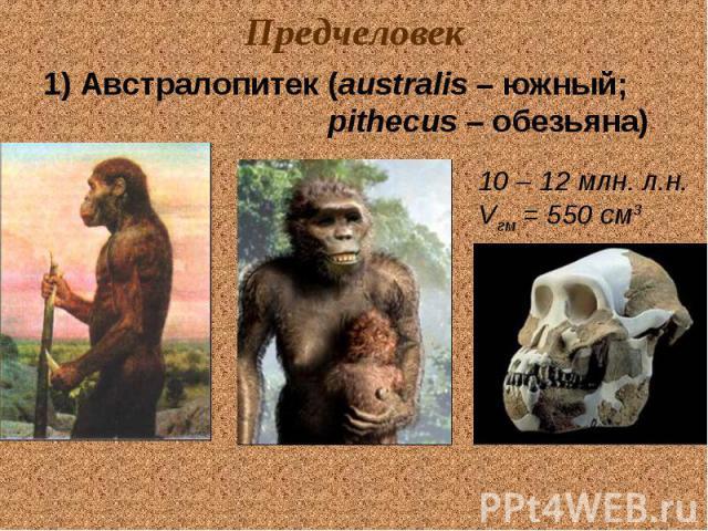 Предчеловек 1) Австралопитек (australis – южный; pithecus – обезьяна) 10 – 12 млн. л.н. Vгм = 550 см3