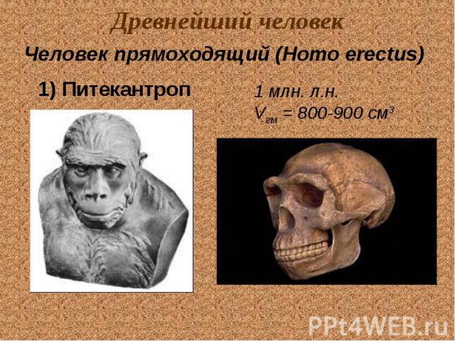 Древнейший человек Человек прямоходящий (Homo erectus) 1) Питекантроп 1 млн. л.н. Vгм = 800-900 см3