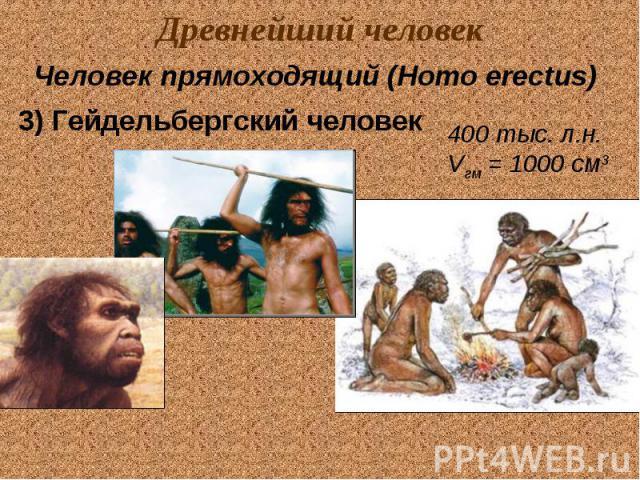 Древнейший человек Человек прямоходящий (Homo erectus) 3) Гейдельбергский человек 400 тыс. л.н. Vгм = 1000 см3