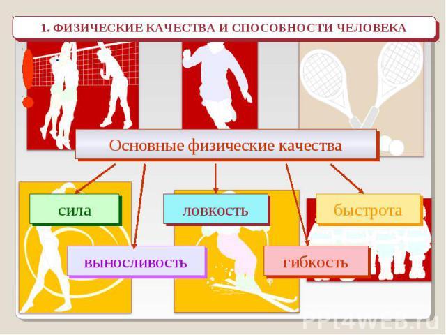 1. ФИЗИЧЕСКИЕ КАЧЕСТВА И СПОСОБНОСТИ ЧЕЛОВЕКА Основные физические качества