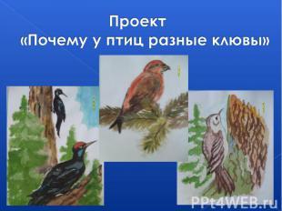 Проект «Почему у птиц разные клювы»