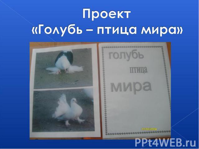 Проект «Голубь – птица мира»