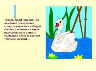 Теперь люди говорят, что он самый прекрасный среди прекрасных лебедей. Сирень ск