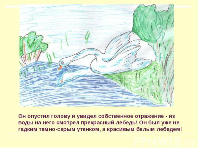 Он опустил голову и увидел собственное отражение - из воды на него смотрел прекрасный лебедь! Он был уже не гадким темно-серым утенком, а красивым белым лебедем!