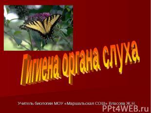 Гигиена органа слуха Учитель биологии МОУ «Маршальская СОШ» Власова Ж.Н.
