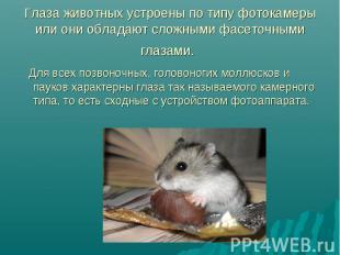 Глаза животных устроены по типу фотокамеры или они обладают сложными фасеточными