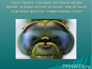 глаза стрекоз - сложные составные органы зрения, которые состоят из более, чем 3