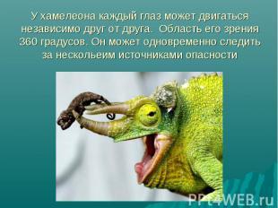 У хамелеона каждый глаз может двигаться независимо друг от друга. Область его зр