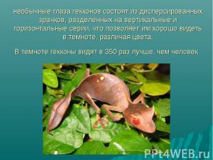 необычные глаза гекконов состоят из дисперсированных зрачков, разделенных на вер