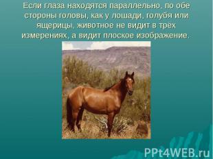 Если глаза находятся параллельно, по обе стороны головы, как у лошади, голубя ил