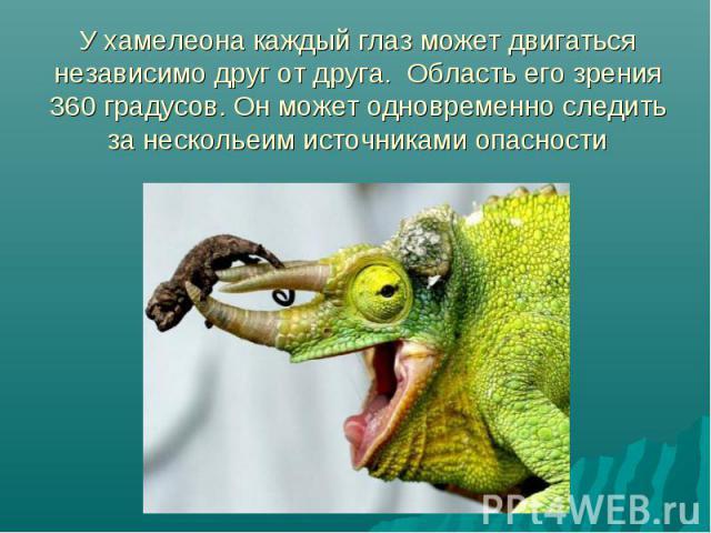 У хамелеона каждый глаз может двигаться независимо друг от друга. Область его зрения 360 градусов. Он может одновременно следить за нескольеим источниками опасности