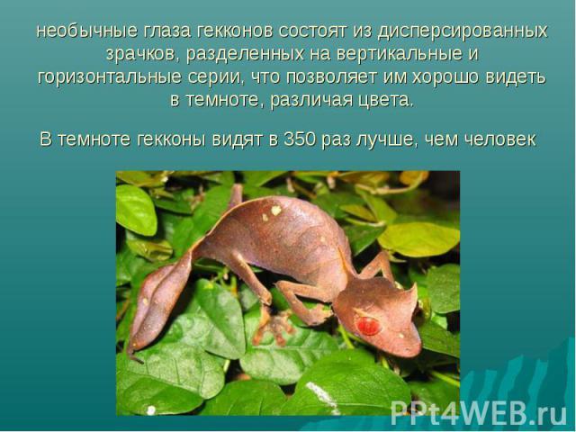 необычные глаза гекконов состоят из дисперсированных зрачков, разделенных на вертикальные и горизонтальные серии, что позволяет им хорошо видеть в темноте, различая цвета. В темноте гекконы видят в 350 раз лучше, чем человек