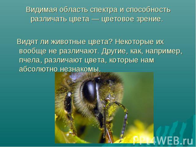Видимая область спектра и способность различать цвета — цветовое зрение. Видят ли животные цвета? Некоторые их вообще не различают. Другие, как, например, пчела, различают цвета, которые нам абсолютно незнакомы.