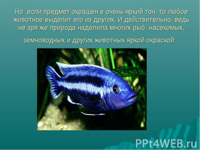 Но если предмет окрашен в очень яркий тон, то любое животное выделит его из других. И действительно, ведь не зря же природа наделила многих рыб, насекомых, земноводных и других животных яркой окраской.